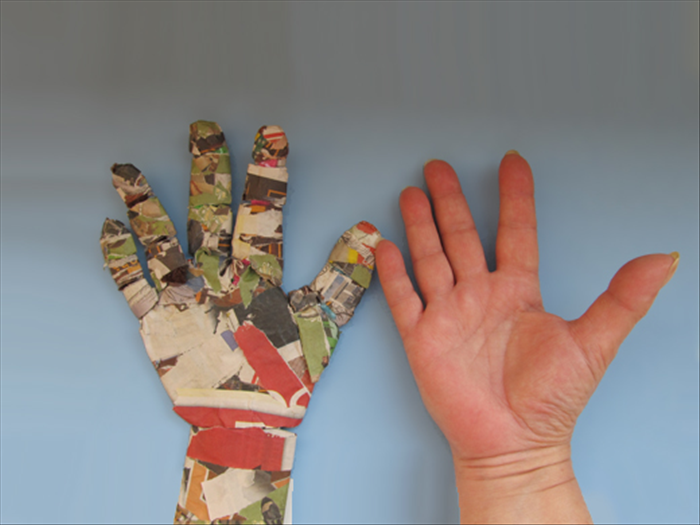 Place your hand palm up next to the model. Look for the highest areas of your hand.